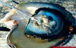Основные отличия морского жемчуга от речного