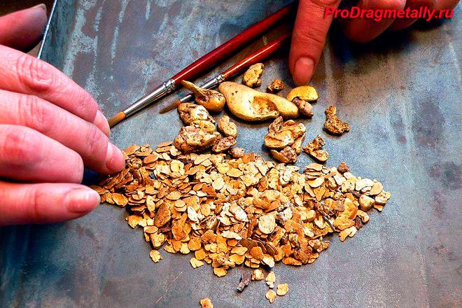 Промытое золото после добычи
